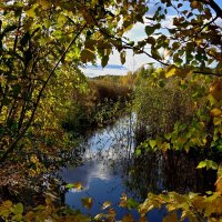 Небольшая речка в лучах осеннего солнца. :: Пётр Сесекин