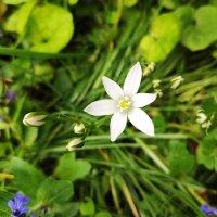 Цветок :: Катарина