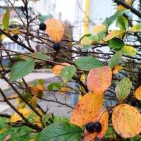 Осенняя листва :: Марина Кушнарева