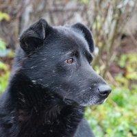 Пёс :: Roman M,