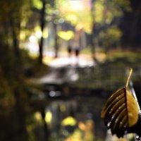Осенний лист и двое :: Марина