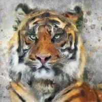 Тигр :: Светлана Кузнецова
