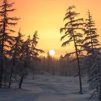 Морозная Арктика :: Александр Велигура