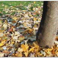 Разбросала осень желтый лист небрежно :: Людмила