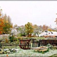 Снежок :: Ольга Митрофанова