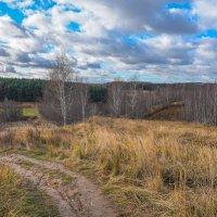 Под небом ноября... :: Владимир Жданов