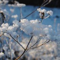 Снежные фотозарисовки 1 :: Татьяна Аистова
