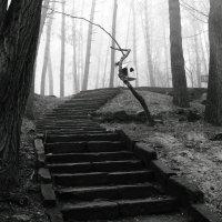 Вниз по лестнице...вверх по лестнице...есть разница? :: Volodymyr Shapoval VIS t
