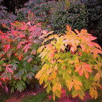 Осенние  краски :: IREN jonina