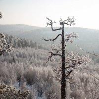на севере диком :: Евгений Тарасов