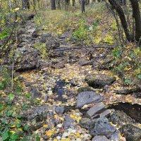 Бежит река,вся в золотых листьях... :: Георгиевич