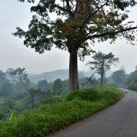Дороги Африки. :: Коста Серб