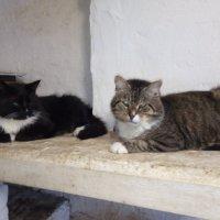 Два кота архаровца!) :: Татьяна Гусева