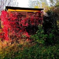 Октябрь ыдался прекрасным   ...! :: Игорь Пляскин
