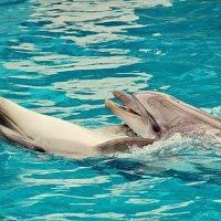 Черноморские дельфины :: Vladimir Lisunov