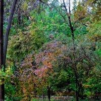 Краски Осени :: Ахмед Овезмухаммедов