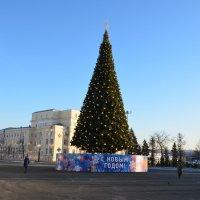 Елка на  Советской площади. :: Алексей