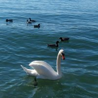 На озере Цюрих. :: Наталья