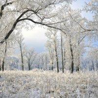 Сибирская зима :: Екатерина Торганская