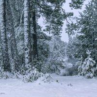 Пасмурный зимний денёк. Тихо, прохладно и снежно... :: Татьяна .