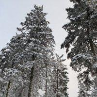 Далекая Сибирь :: Борис