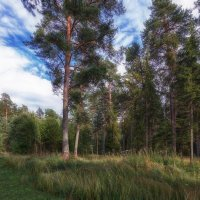 Летний лес :: Serge Riazanov