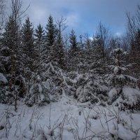первый снег в новом году :: vladimir