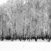 Зимние этюды :: Валерий Петров