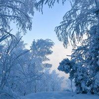 В серебре зимы:) :: Владимир Звягин