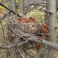 Гнездо :: Елена Елена