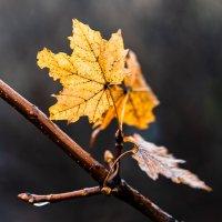 Дело было осенью... :: Юрий ЛМ