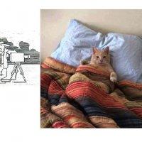 Спальня кота Осипа :: Борис