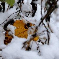 Осенняя листва и снег :: Heinz Thorns