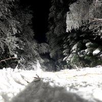 Ночью в лесу :: александр пеньков