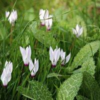 Первое Января - первые цветы в лесу) :: Irina Radzinsky
