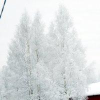 Январь :: Наталья Пендюк Пендюк