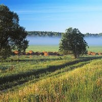 Туманное утро в долине Протвы :: Сергей Курников