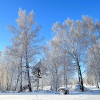 Морозный зимний день в январе :: Вера Андреева