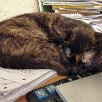 Вот так и вырастет кот учёный... :: Тамара Бедай