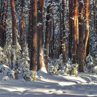 Ещё недавно ждали зимник... :: Лесо-Вед (Баранов)