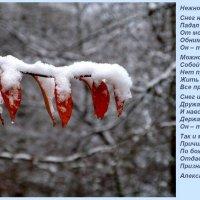 Поэзия зимы :: Heinz Thorns