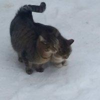 Зимняя кошачья любовь на снегу :: Pavlov Filipp