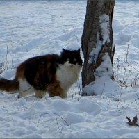 По колено в снегу :: Татьяна Смоляниченко