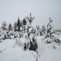 зима 14 :: Константин Трапезников