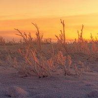 Зима на севере :: Павел Греков