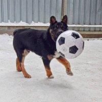 Отважный ловец мячей! :) :: Елена Хайдукова  ( Elena Fly )