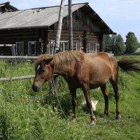 Смирная лошадка. :: Galina S*