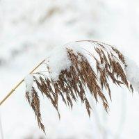 Зима :: Lysa