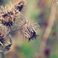 Колючки тоже бывают прекрасны :: Faina Popova