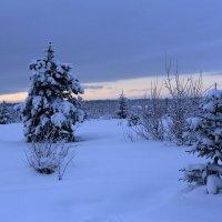 Холодный закат. :: Galina S*